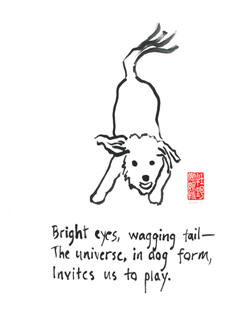 Bright-eyes-wagging-tail-for-WP-Press.jpg