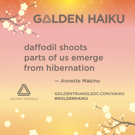 daffodil shoots-Golden Haiku sign.jpg