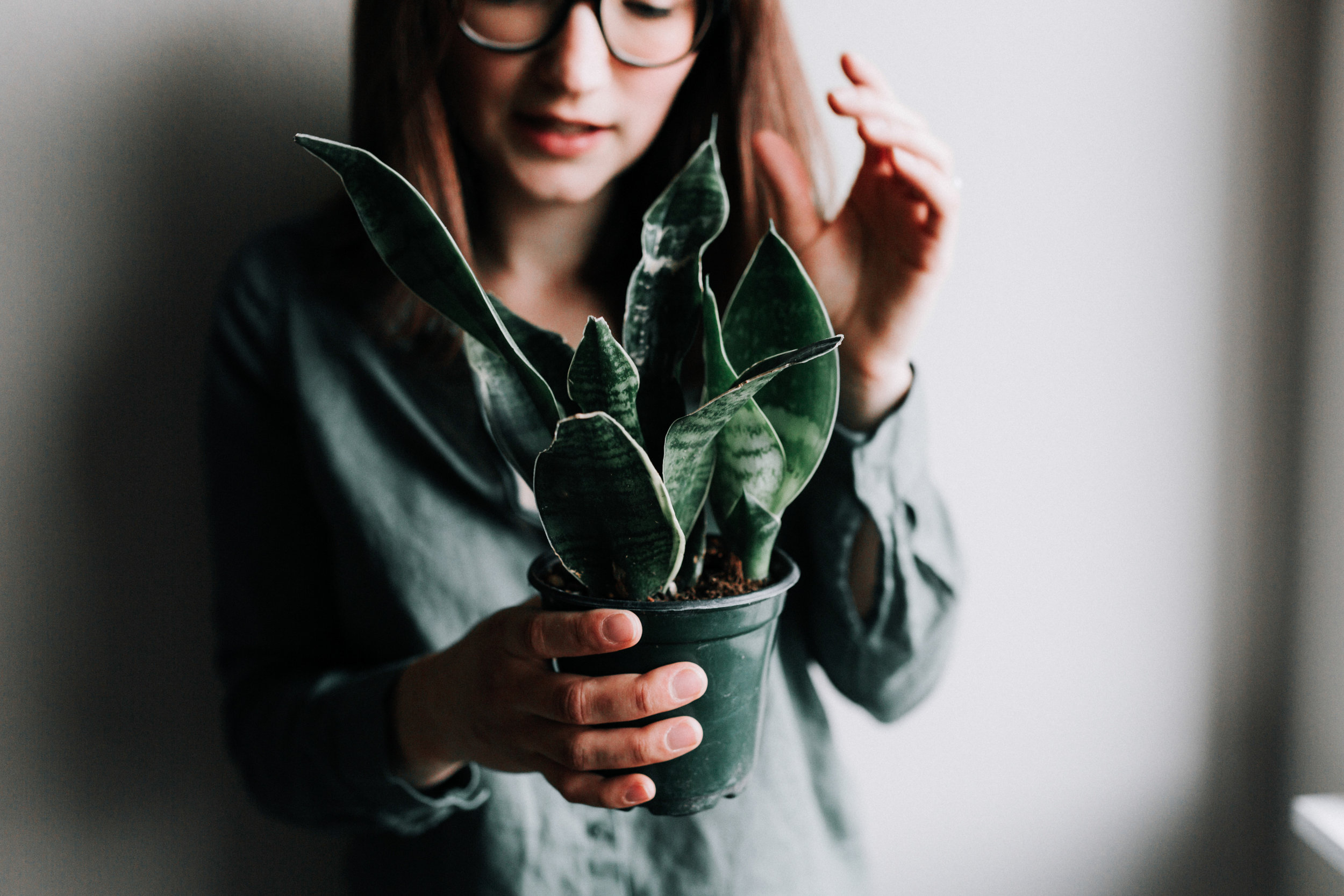 Snake Plant Houseplant Care guide