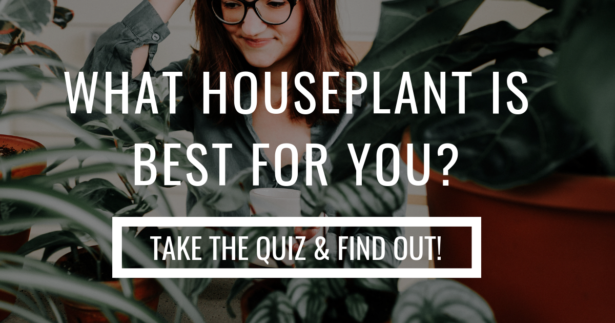 READY TO FIND YOUR PERFECT HOUSEPLANT? Take the quiz!