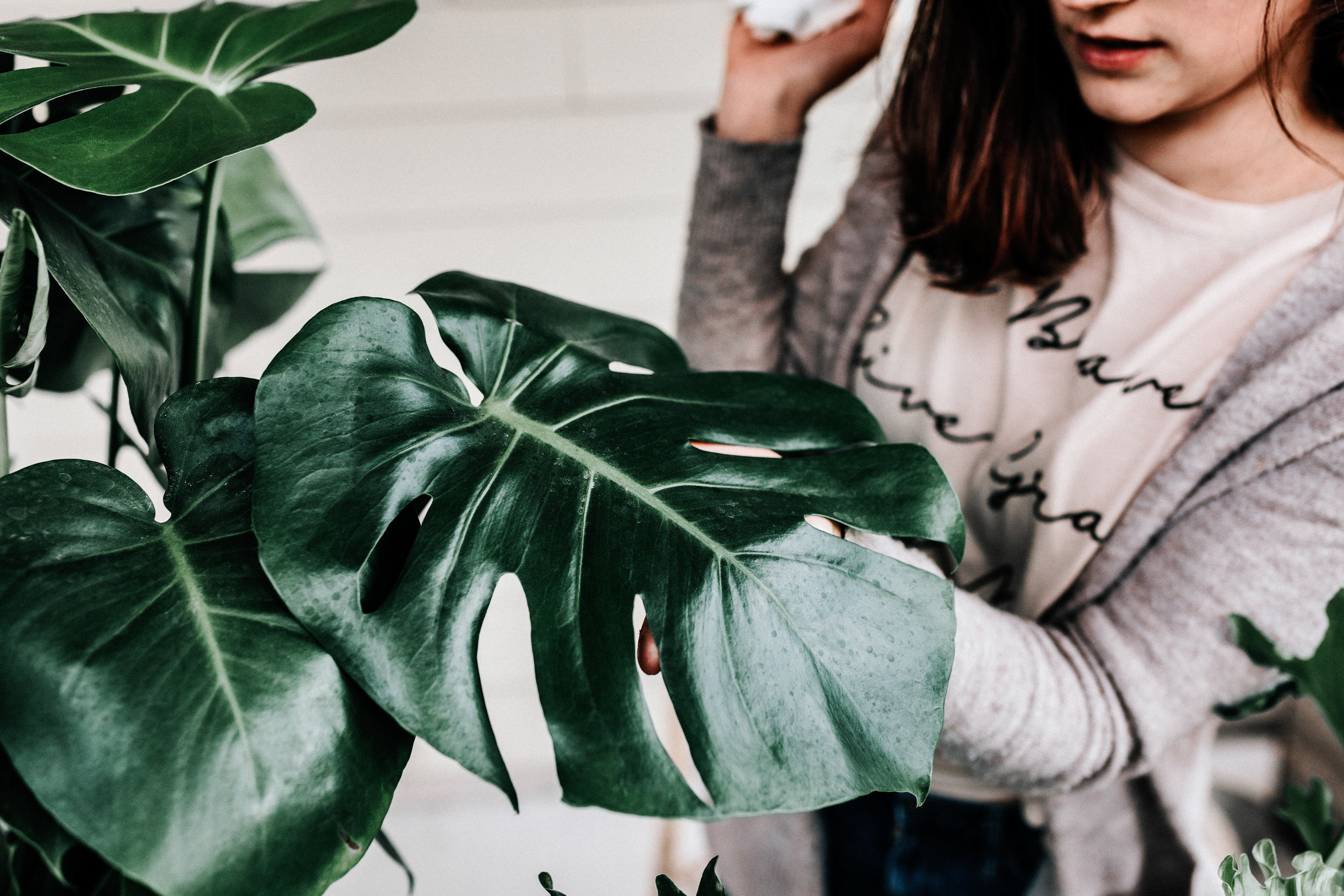 Keep your the leaves free of dusty and debris - Monstera houseplant care guide by Revive Nursery
