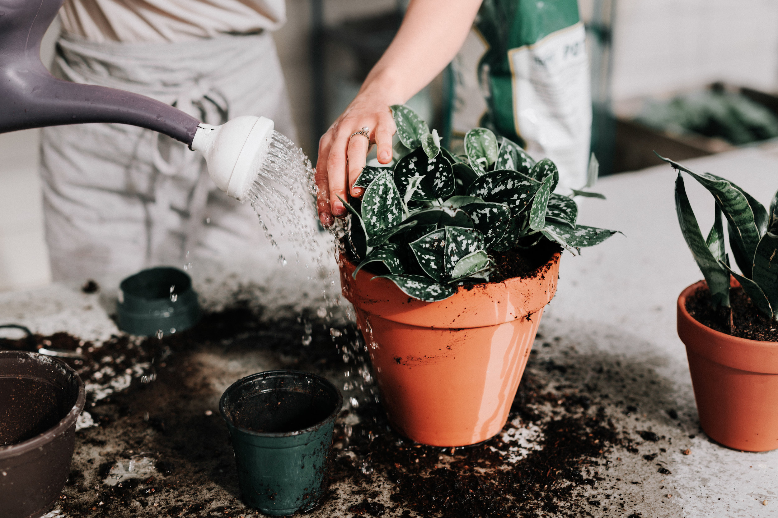 How to water your houseplants (the RIGHT WAY!) #growwellpodcast