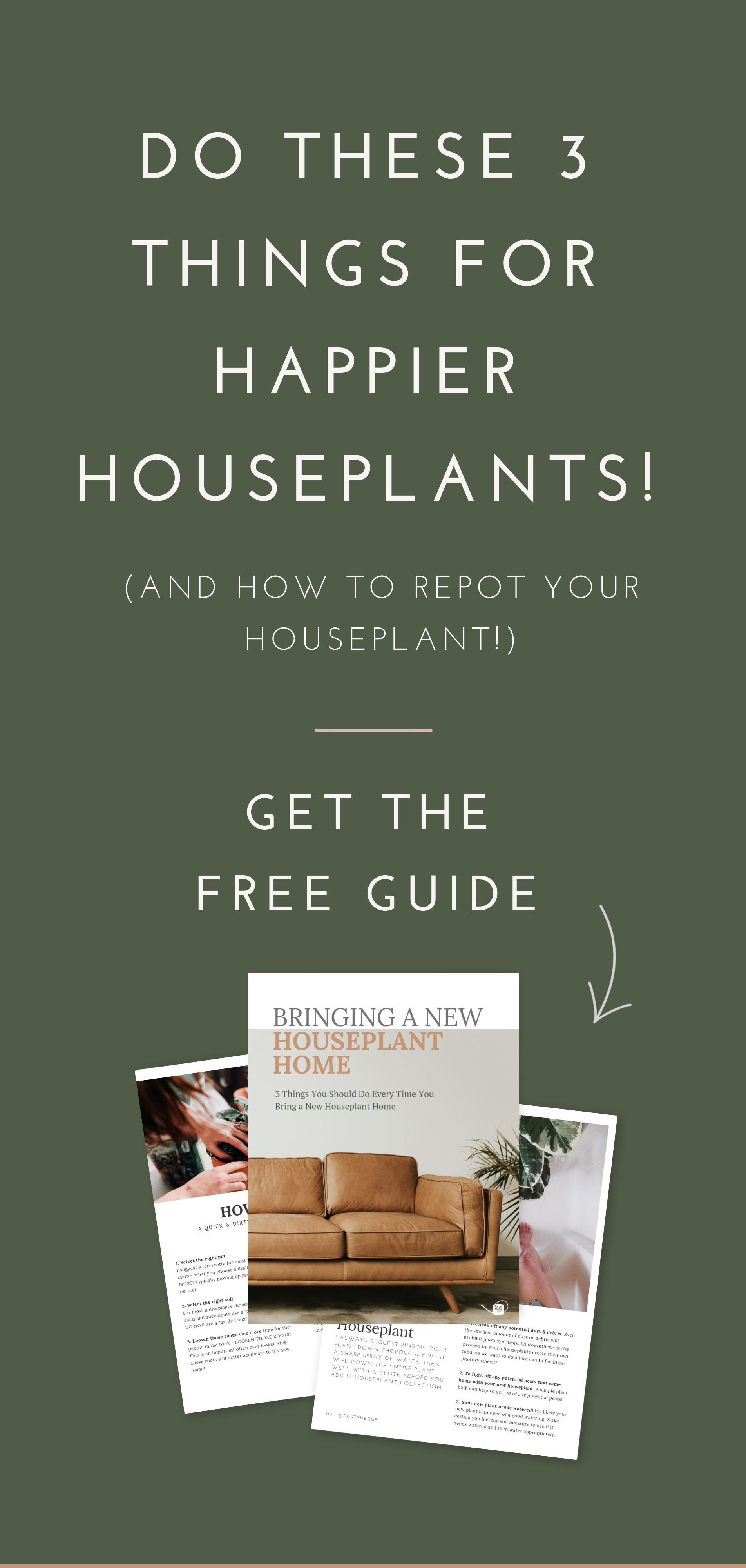 Are you doing these 3 (often overlooked) things to your houseplants?