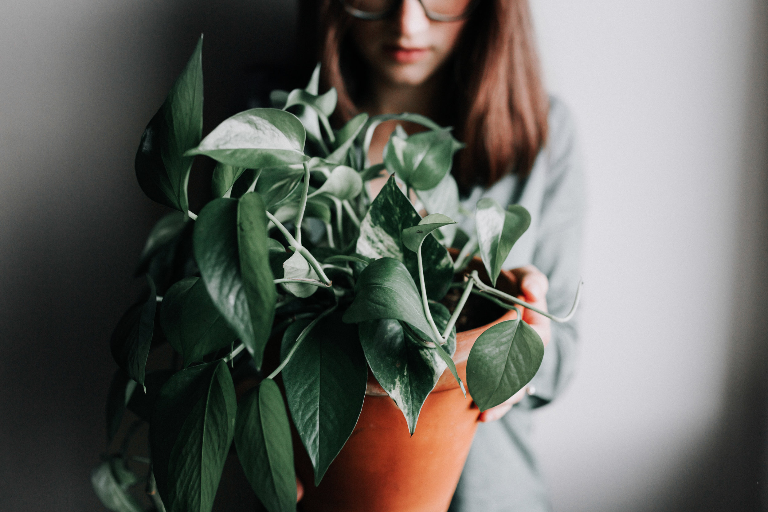 Best easy-care houseplant, low light houseplant, my FAVORITE houseplant - pothos aka devil's ivy house plant care guide
