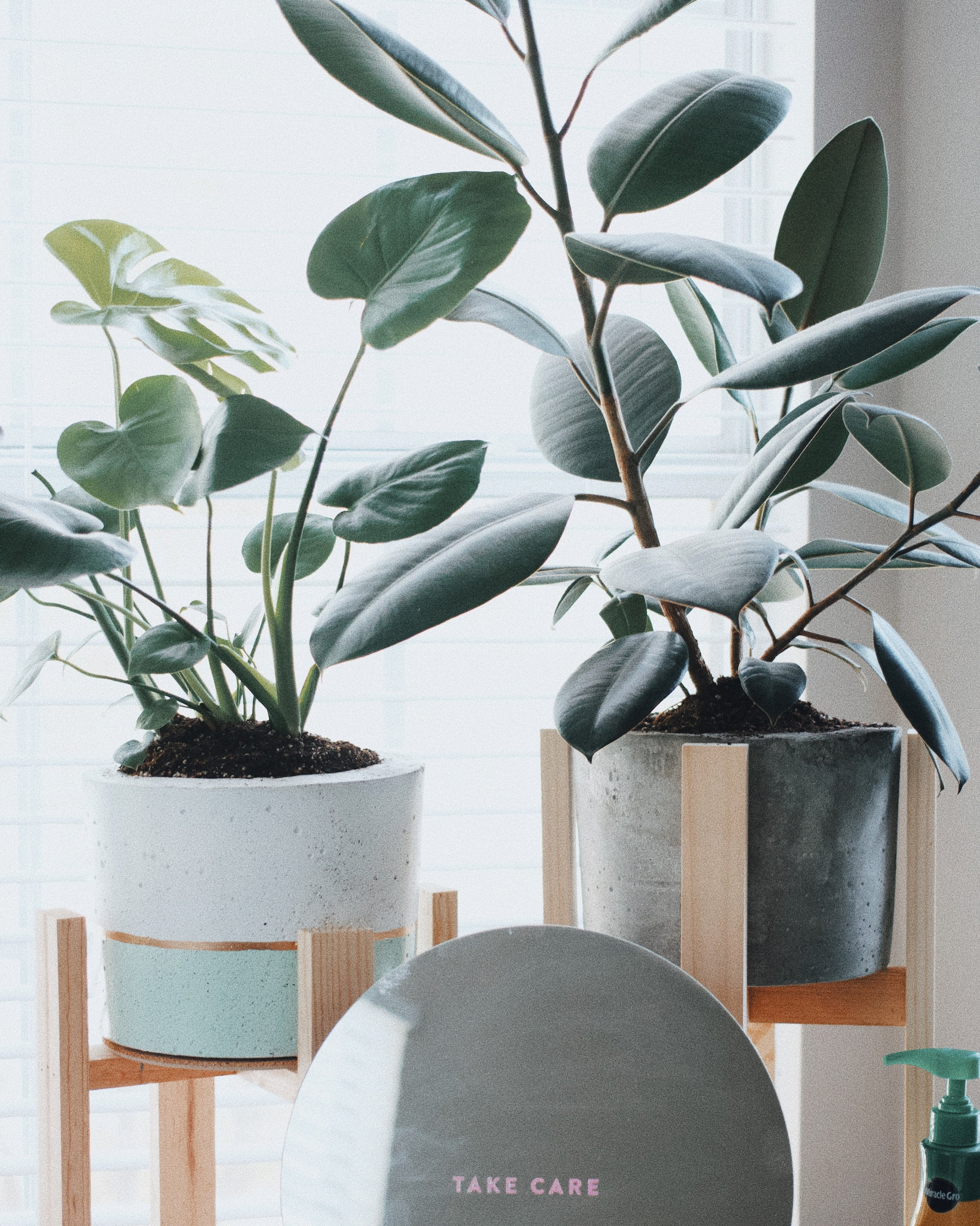"""""""Dusty makes houseplant care fun and easy to understand. I've had fun building my houseplant collection and I feel like I actually know what I am doing!"""" - Lilah Higgins, proud fiddle leaf fig momma"""