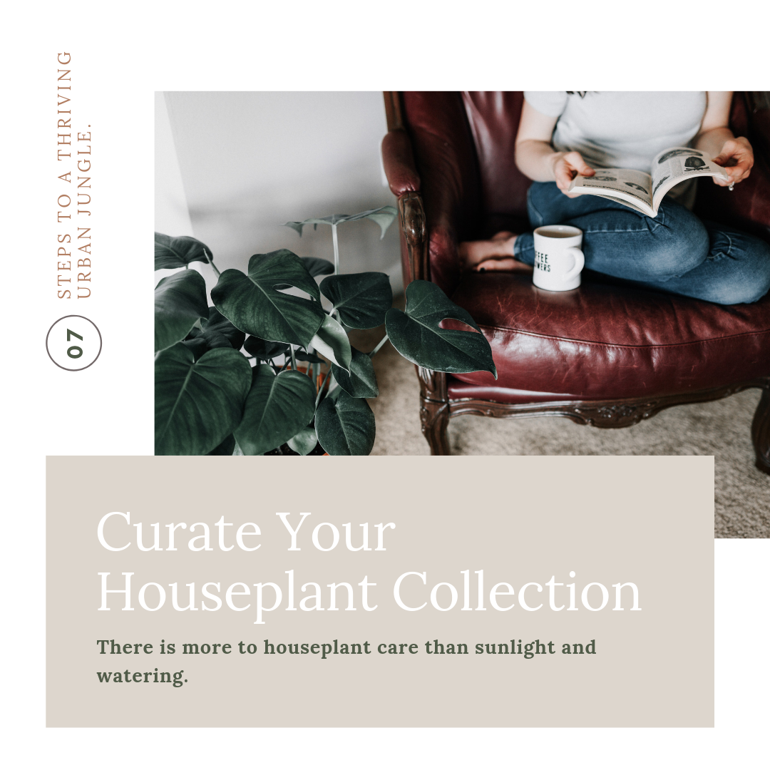 Curate your houseplant collection by Dusty Hegge.png