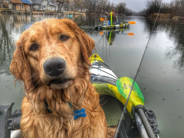 Want to hear some barking good news?! Dakota wants you to know that all of our Jackson Kayaks are $200 to $400 Off! Don't miss out on the big one because the sale lasts through this Saturday 10/27. Price reductions vary depending on model. #kayaking #watersport #fishinglife #fishing #dogsofinstagram #adventure #wander #panama #catchoftheday