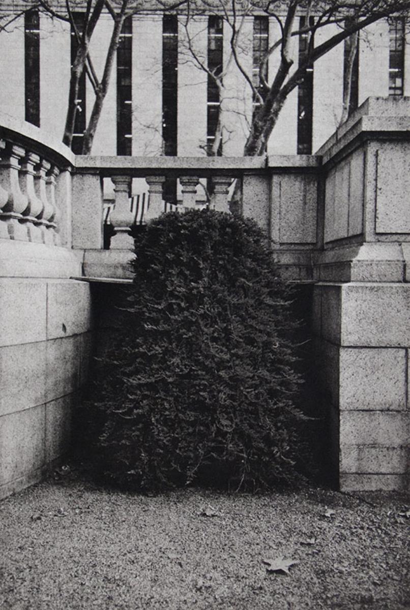 "Philip Van Keuren, SHRUB II, 2016, photogravure, 18"" x 14"" ed: 12"
