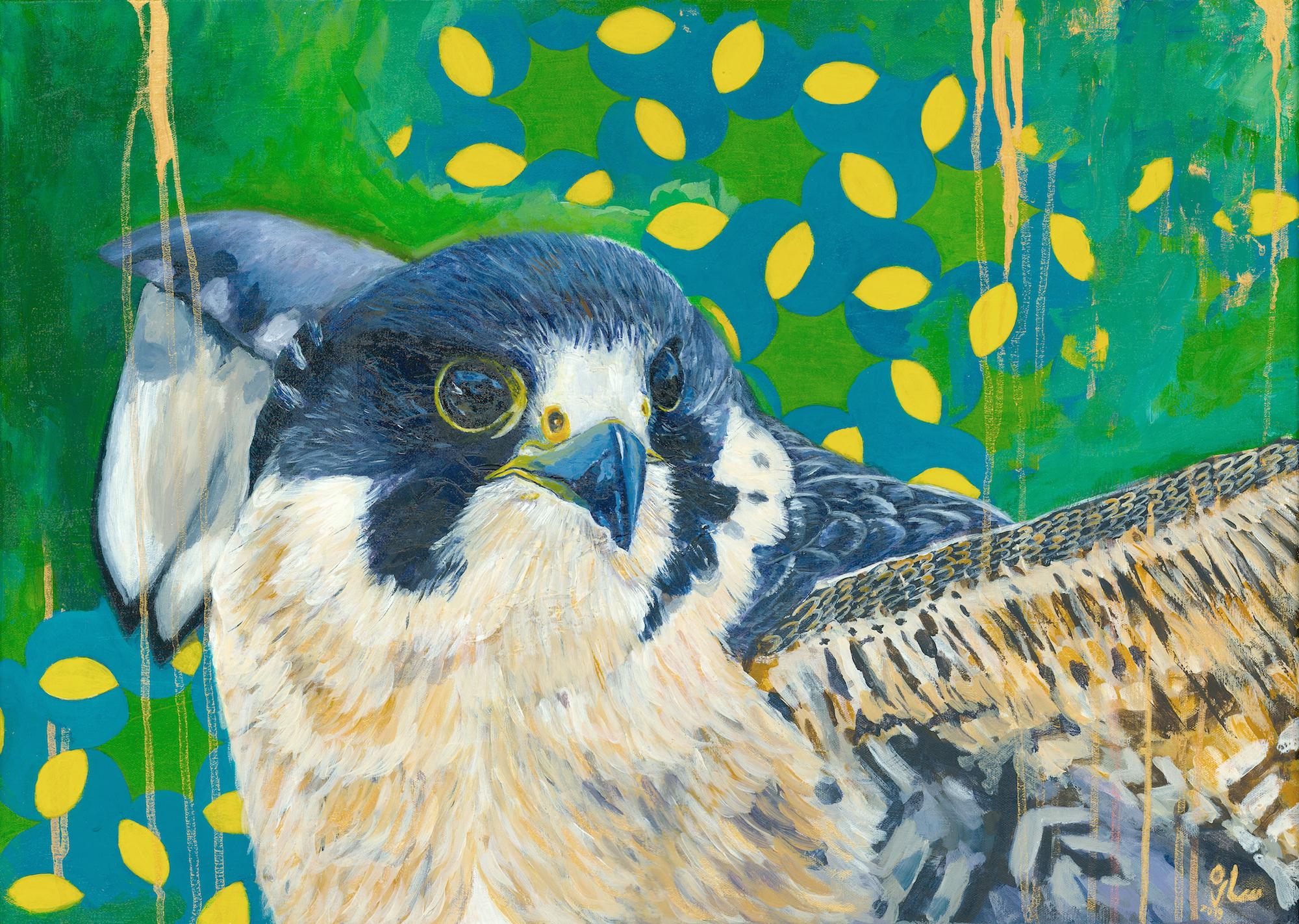 Falco-p.jpg