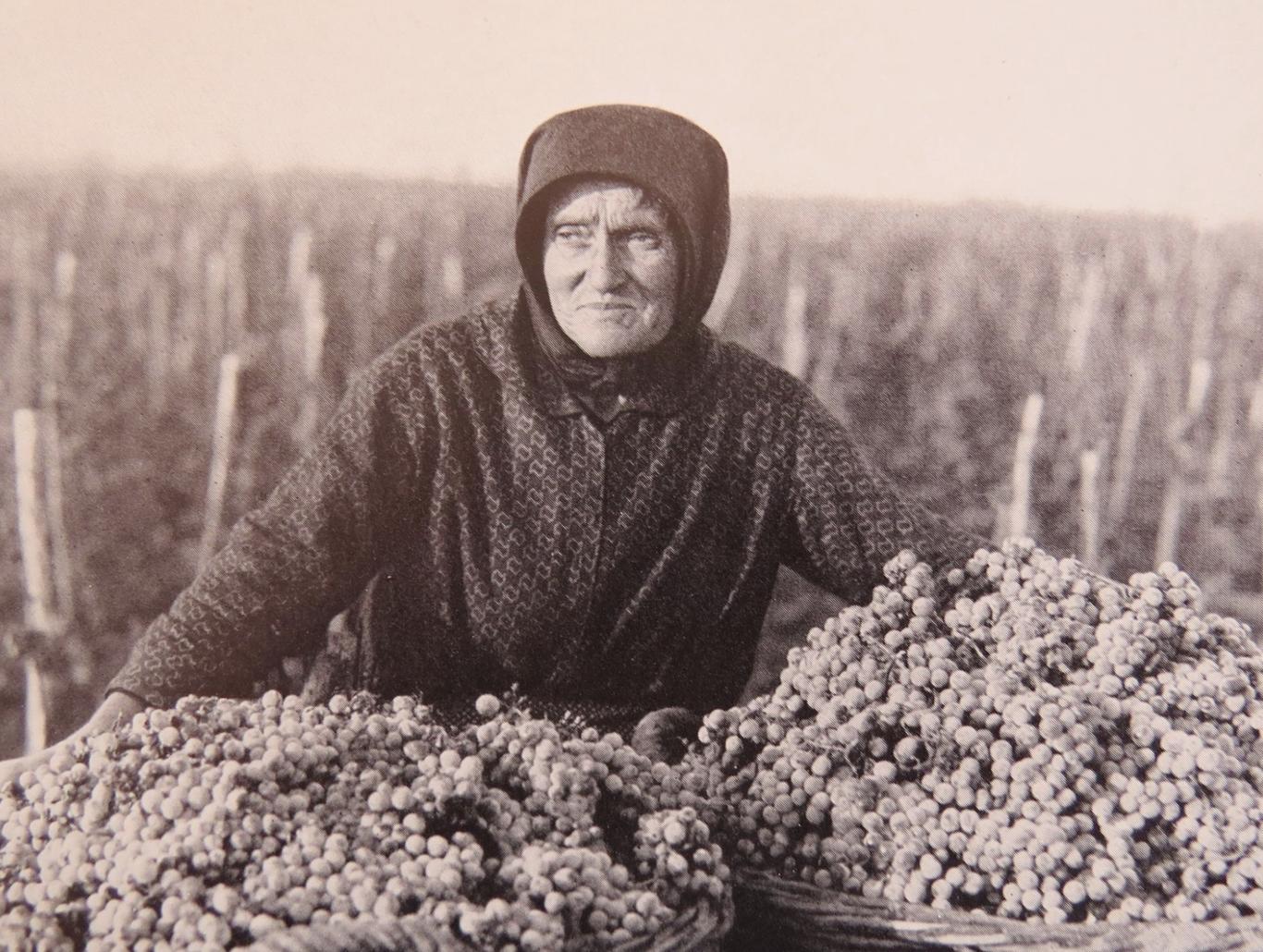 Village woman gathering the harvest.