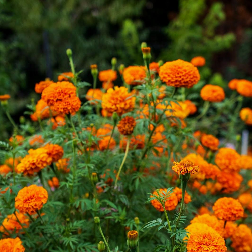 Pollinate3.jpg