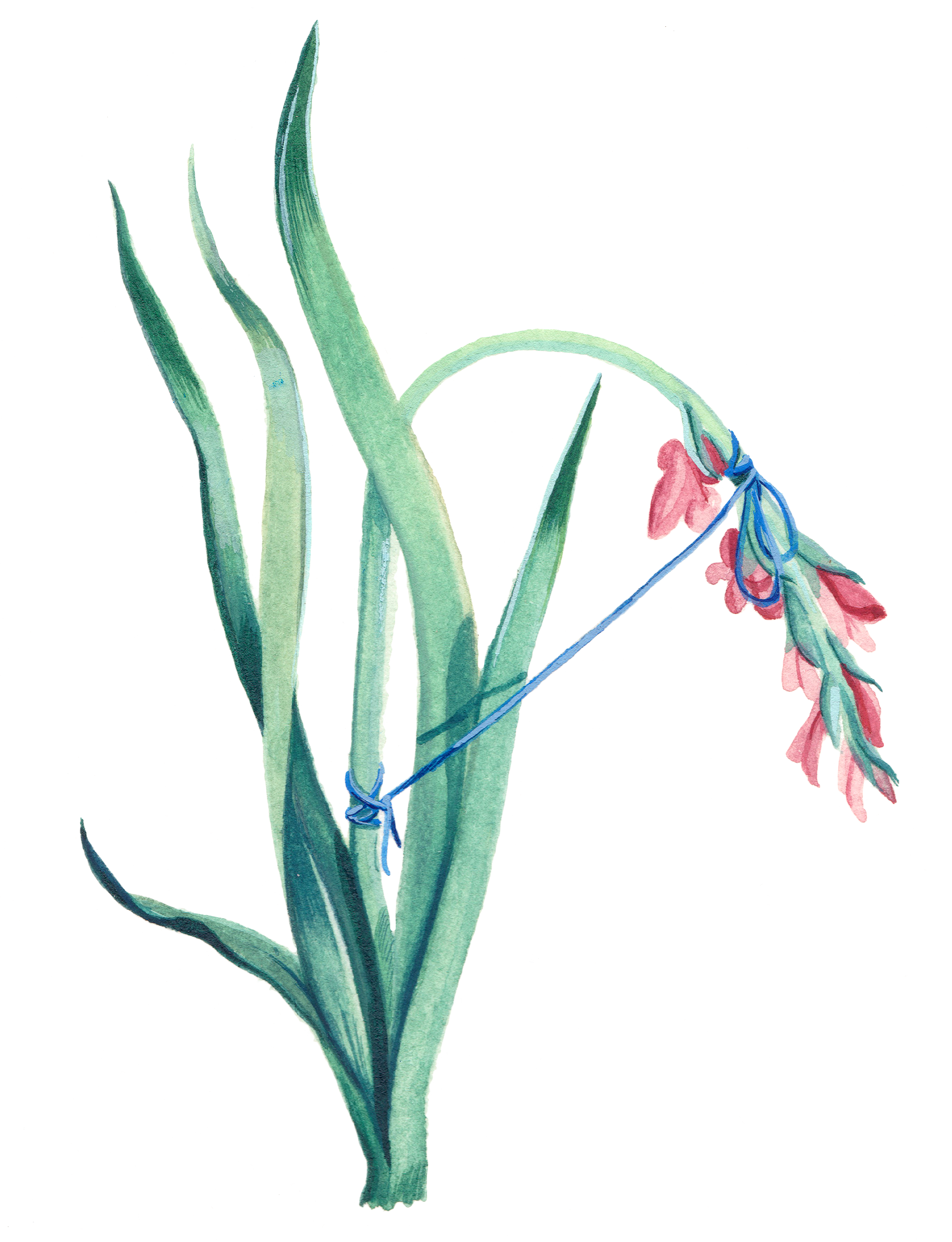flower1Upload.png