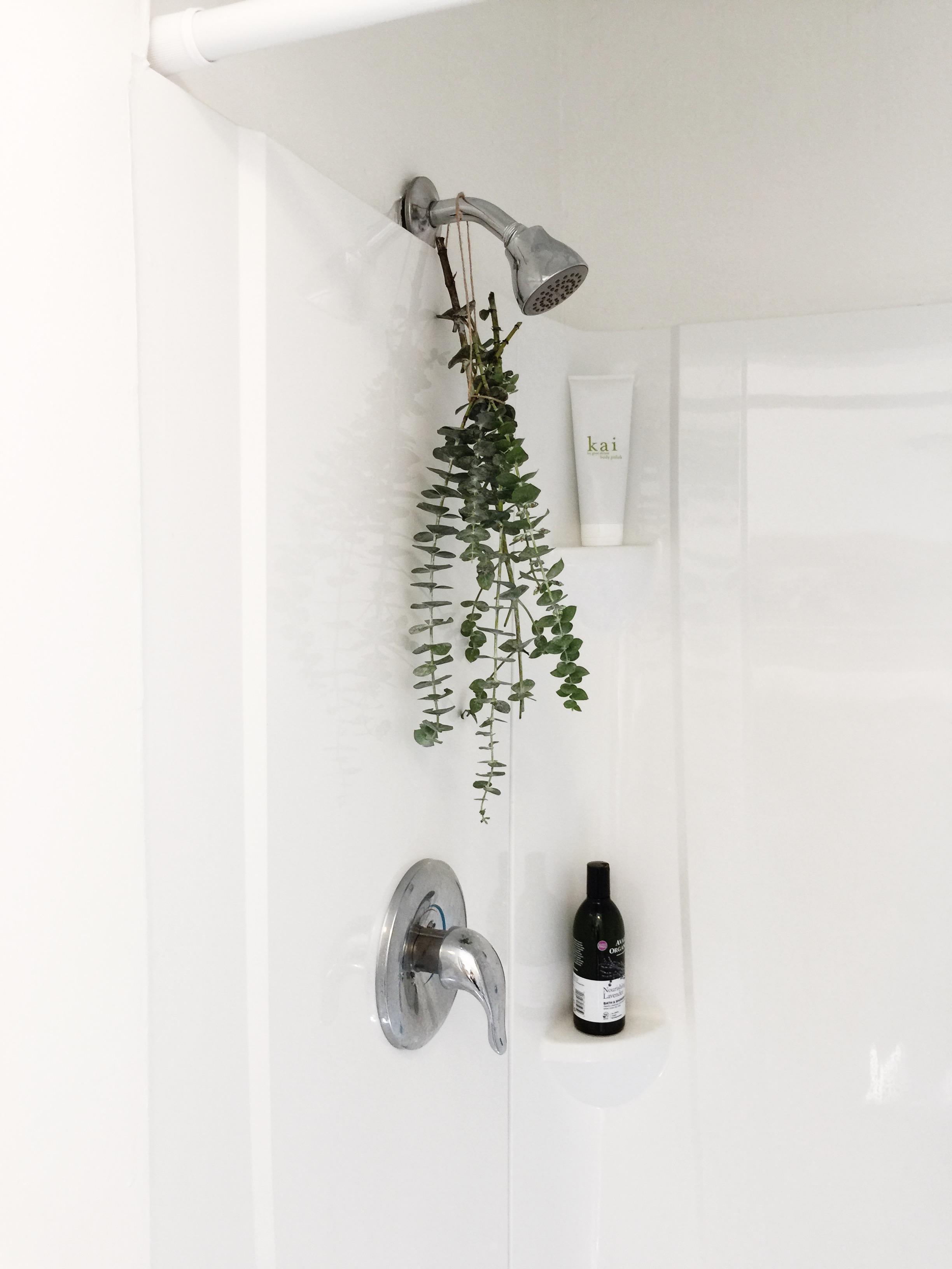 basedonbeige_eucalyptus_shower
