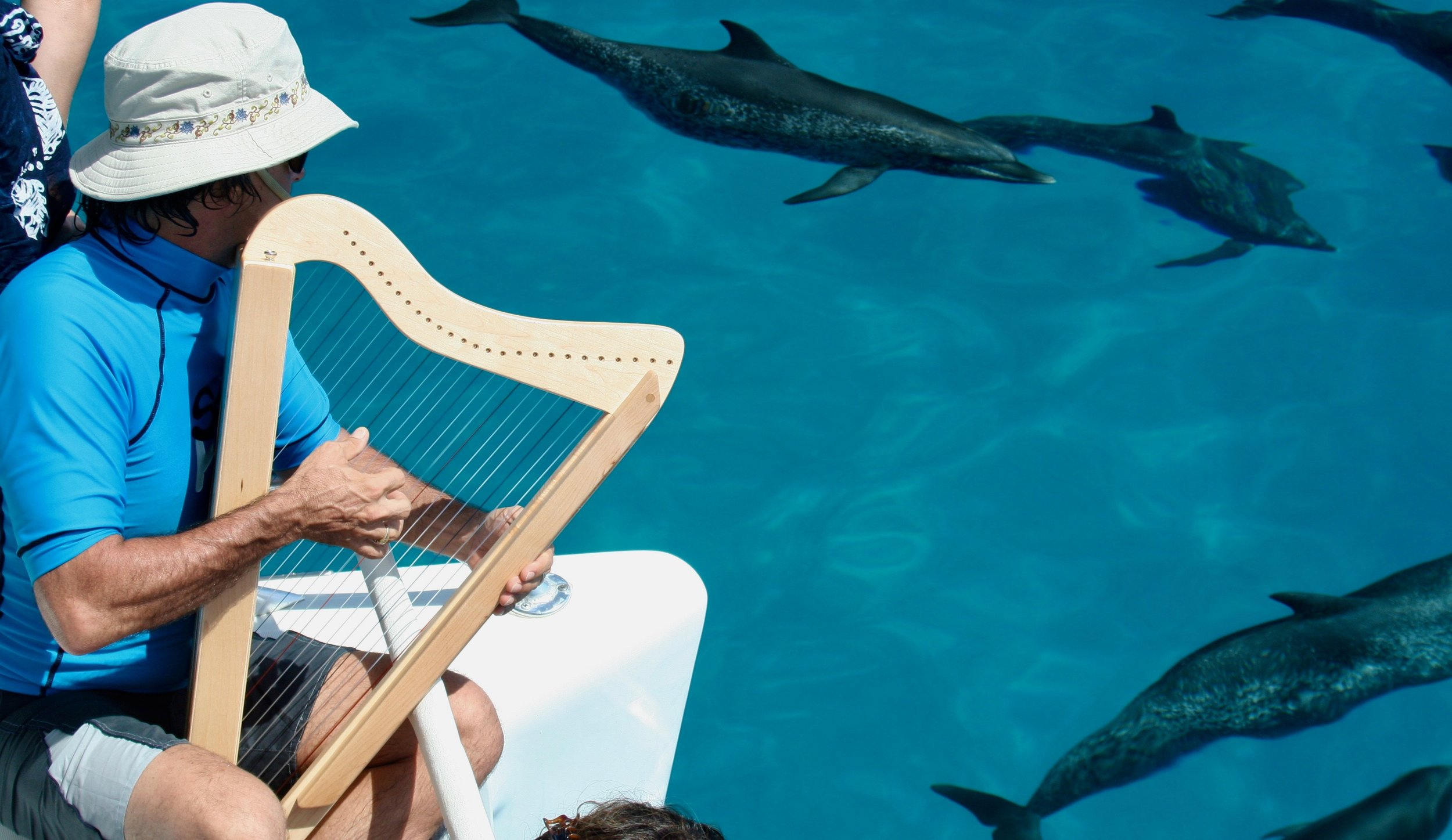 Peter Sterling plays for dolphins from the bow of a yacht.