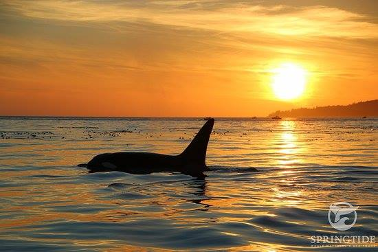 Salish Sea.jpg