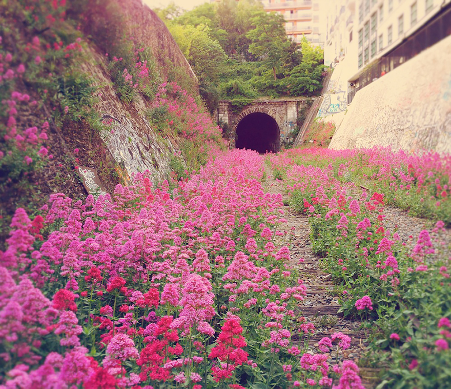 Train Flowers.jpg