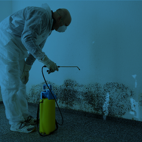 Our professional remediation teams will help prepare your property.