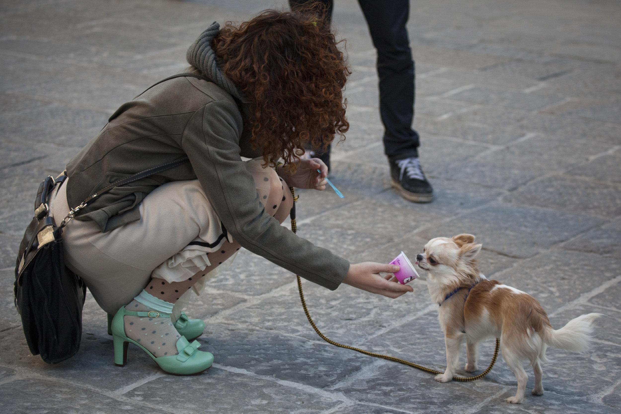 ChihuahuaIceCream.jpg