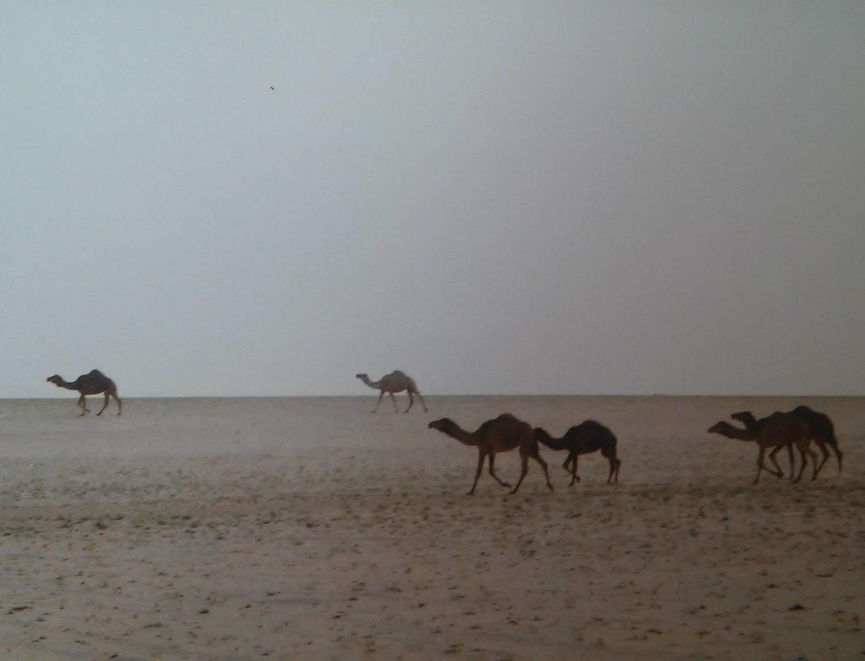 Kuwait -