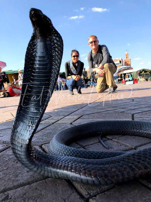 travelversary month 2 snake.jpg