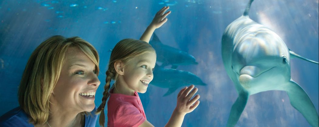seaworld-orlando-dolphin-view-1050x420.jpg