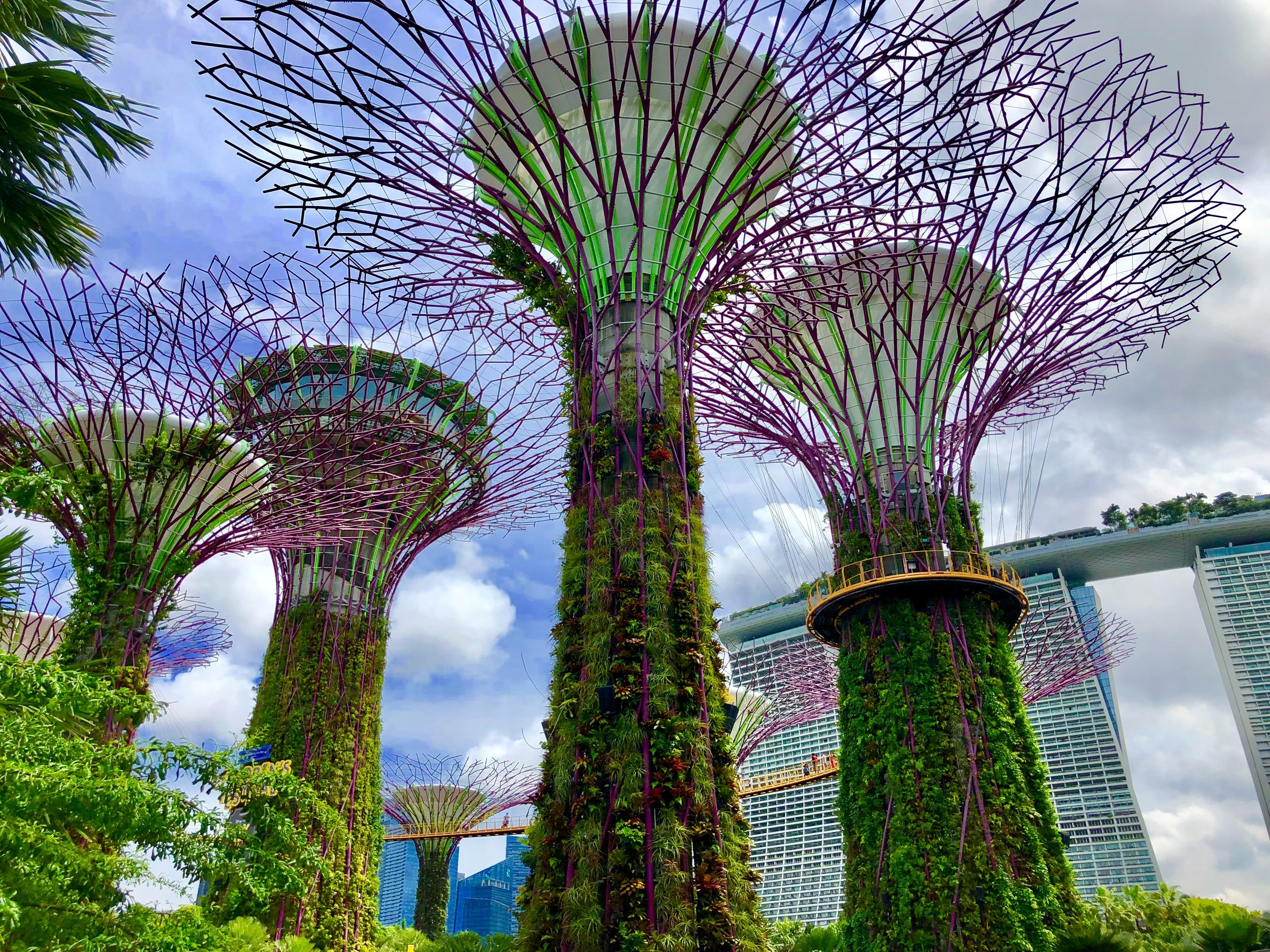 singapore super trees gardens by the bay