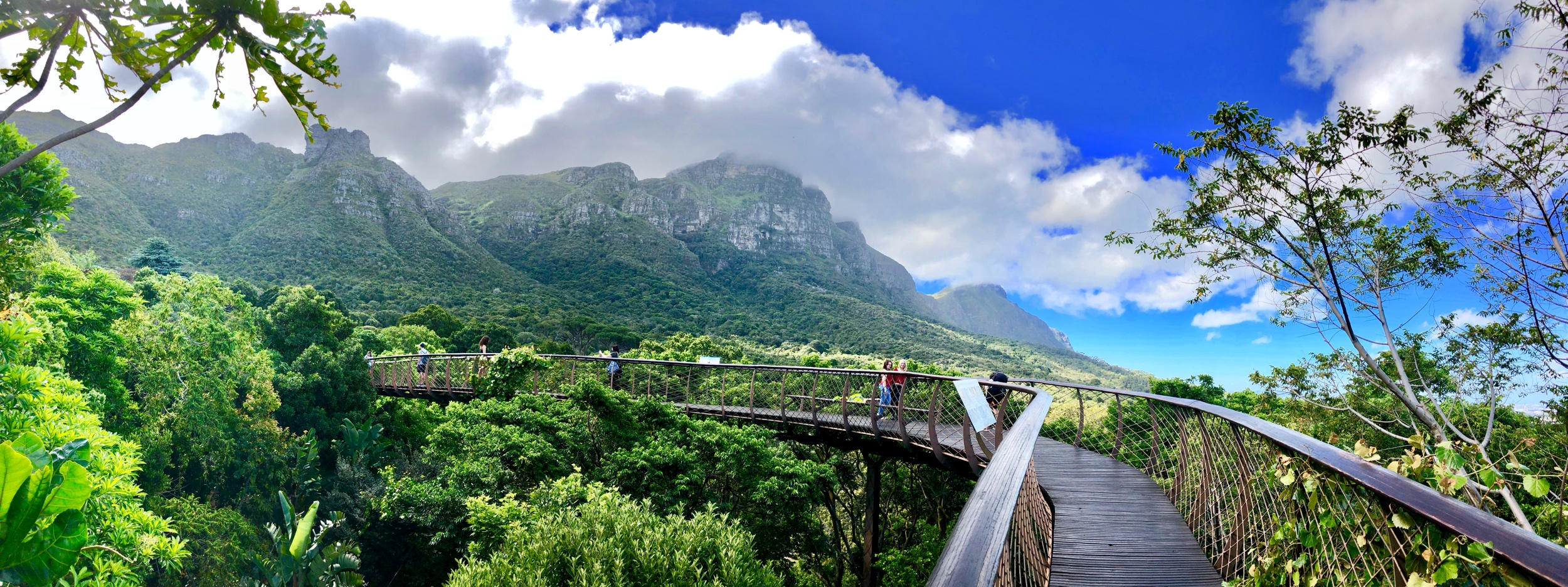 Panorama view of Boomslang Tree Top Walk Kirstenbosch Cape Town