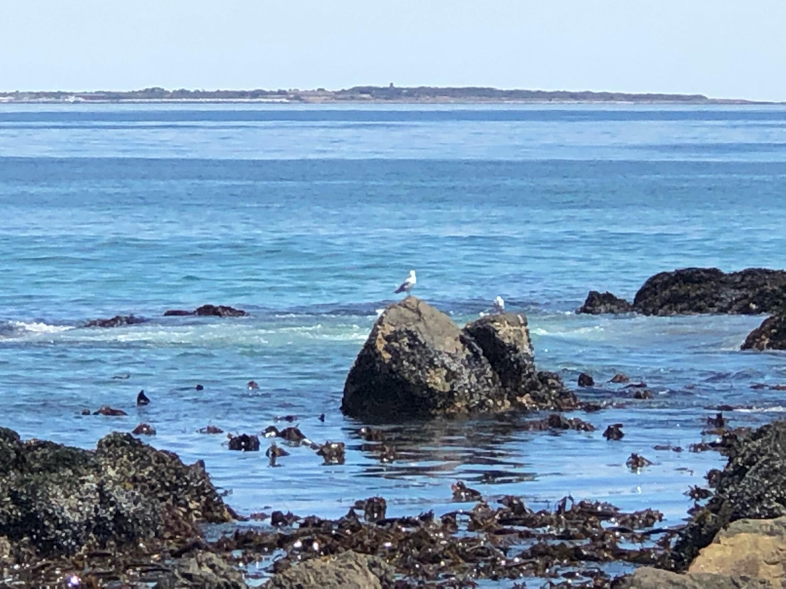 Birds resting on rocks in Cape Town