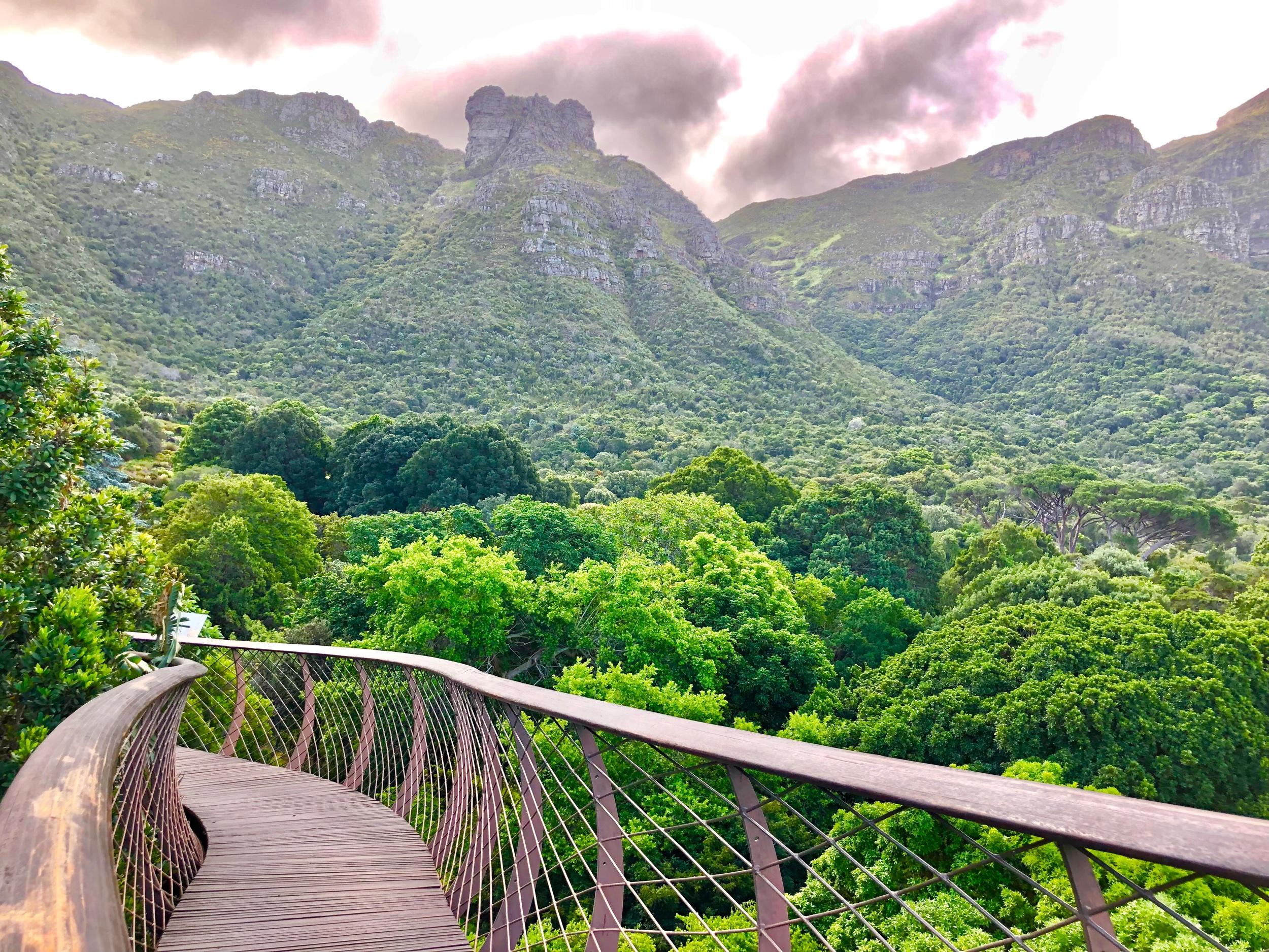 Tree Top Walk in Kirstenbosch Botanical Gardens