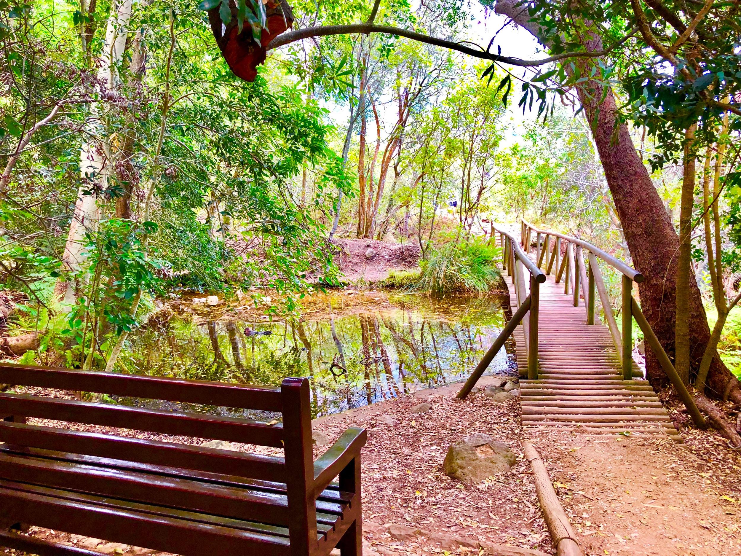 Hiking in Kirstenbosch Botanical Gardens