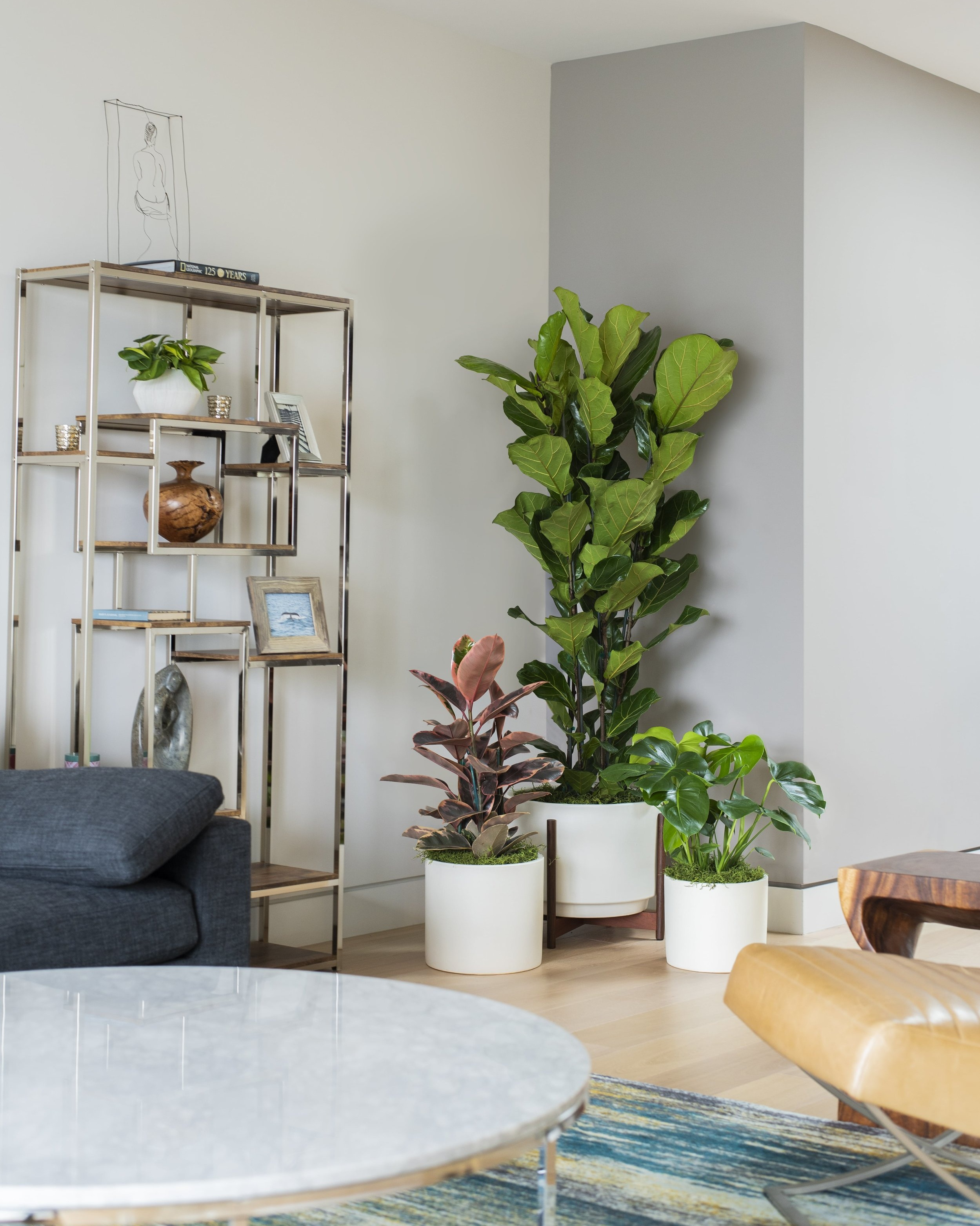 Delivery & Installation - We'll do the heavy lifting. Our team of plant fairies will beautifully stage your new green additions, leaving you with a fresh photo-worthy look.