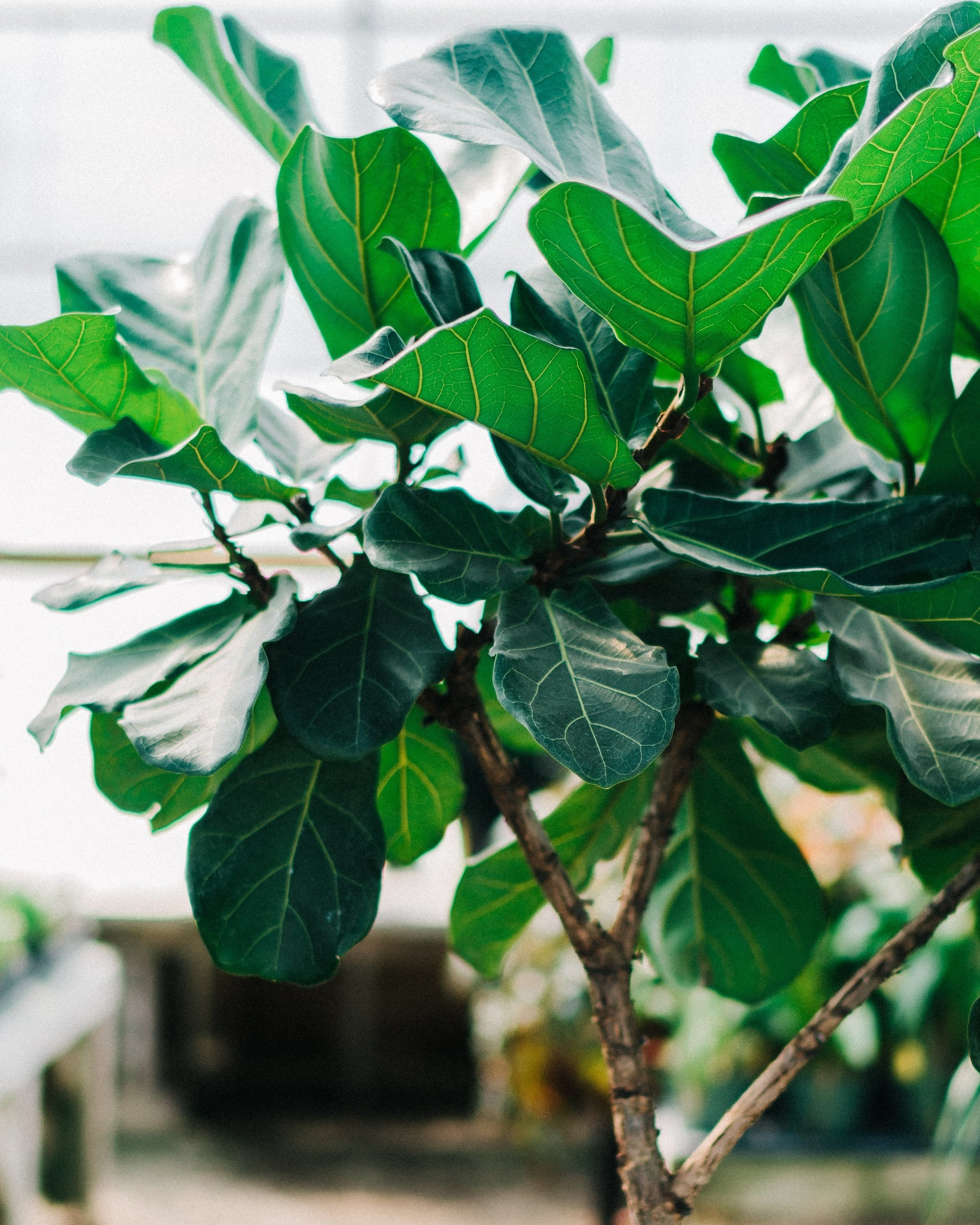 Maintenance - Let us be the experts. We offer weekly maintenance for your plant babies with a 100% replacement guarantee. We'll make sure your plants always look and feel their very best.