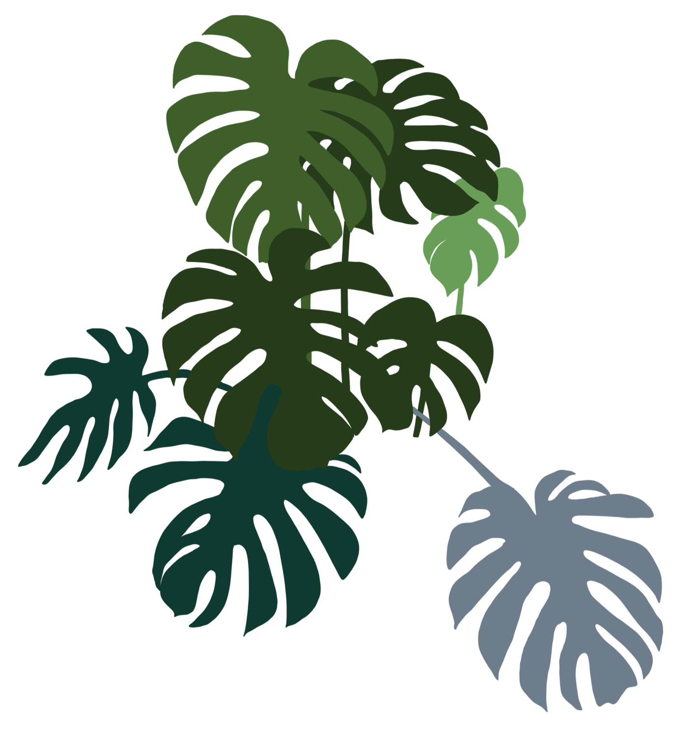 monstera-bunch-right.png