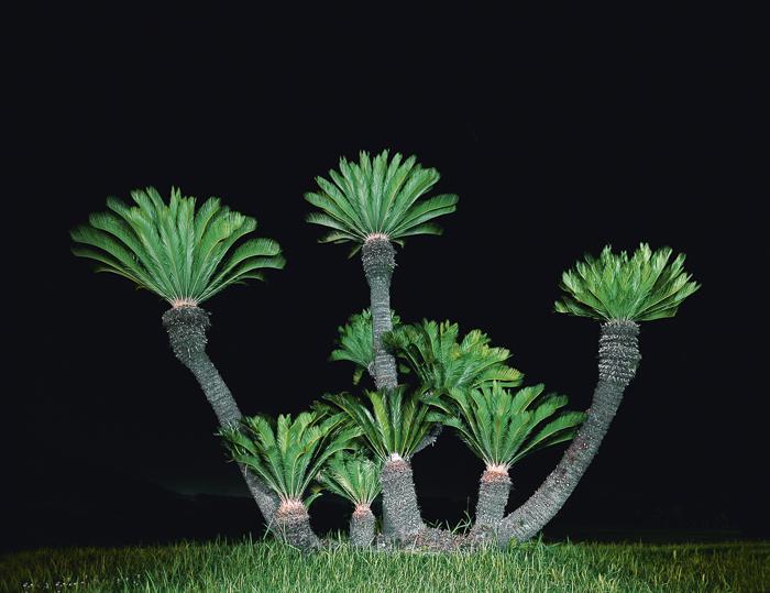 Photo: Palm Tree I, Itoshima, Japan 2011