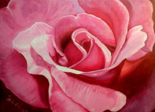 """Stephanie's Rose"""