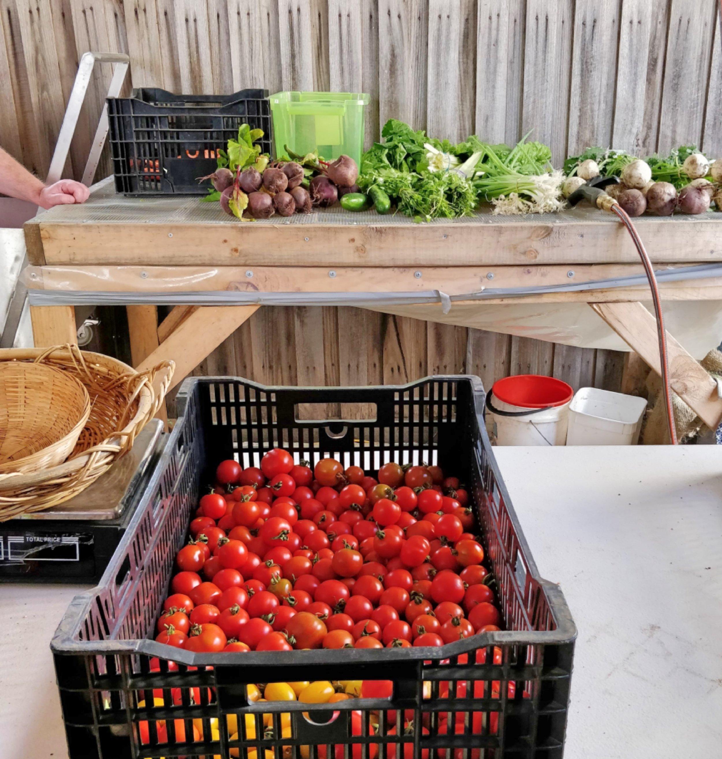 Reusable Nation - urban farm produced vegetables.jpg