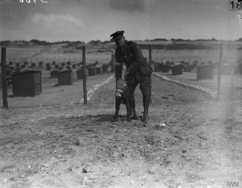 © IWM 29559. a british war dog wears a gas mask as it is held by its handler at the british army kennels near etaples, the rows of kennels can be clearly seen in the background
