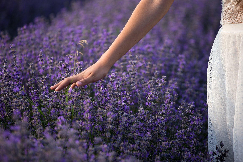 lavender-3576129_1920.jpg