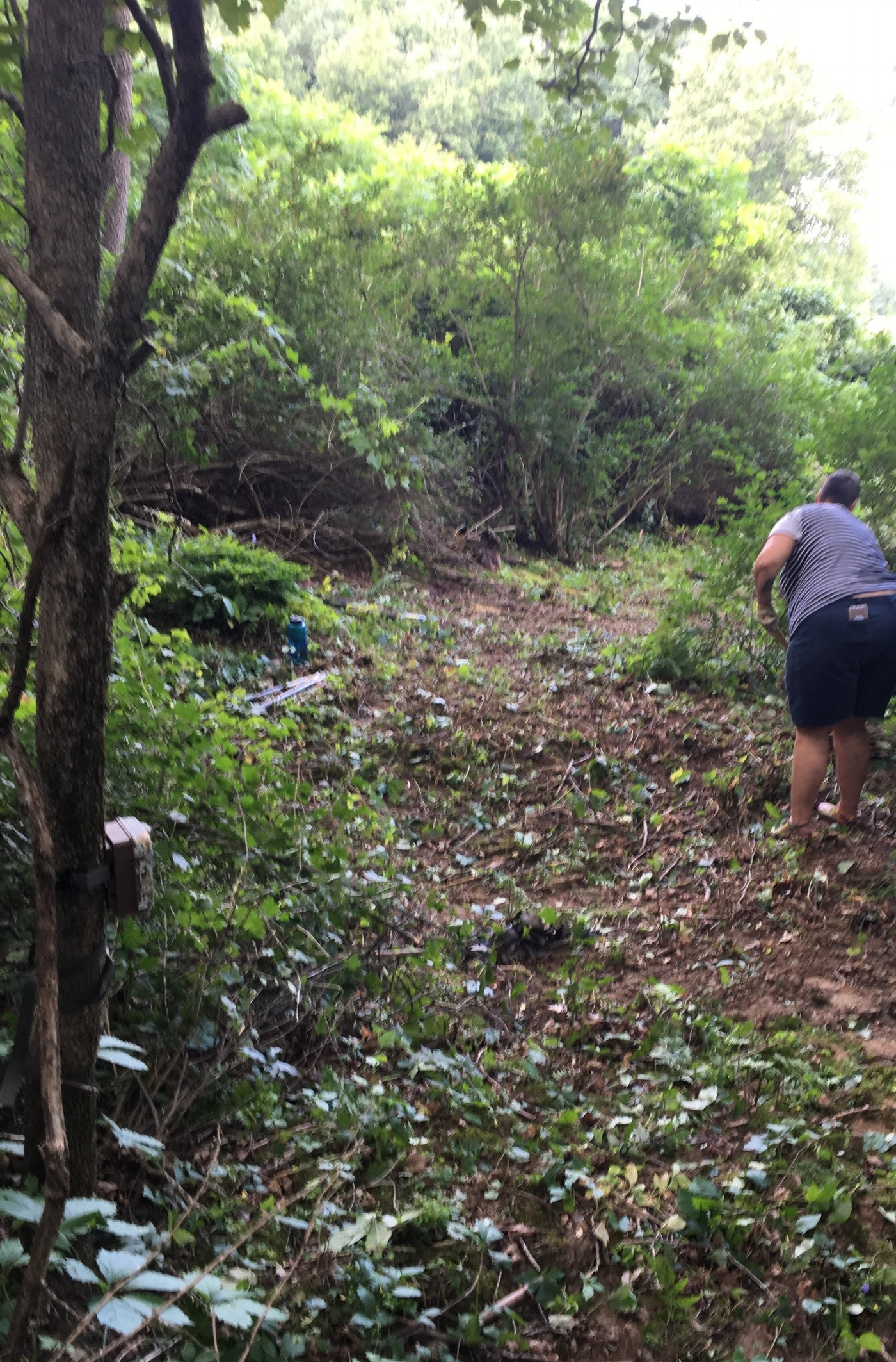 2018 - Having completed the first stage of our project by building steps instead of a road, we are now working on the trail, removing dangerous cattle fencing and cutting overgrown, thorny bushes (wearing proper gear).