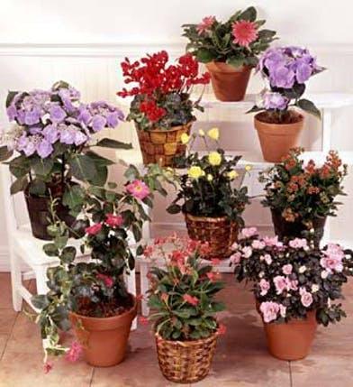 bloomingplants36053.jpg