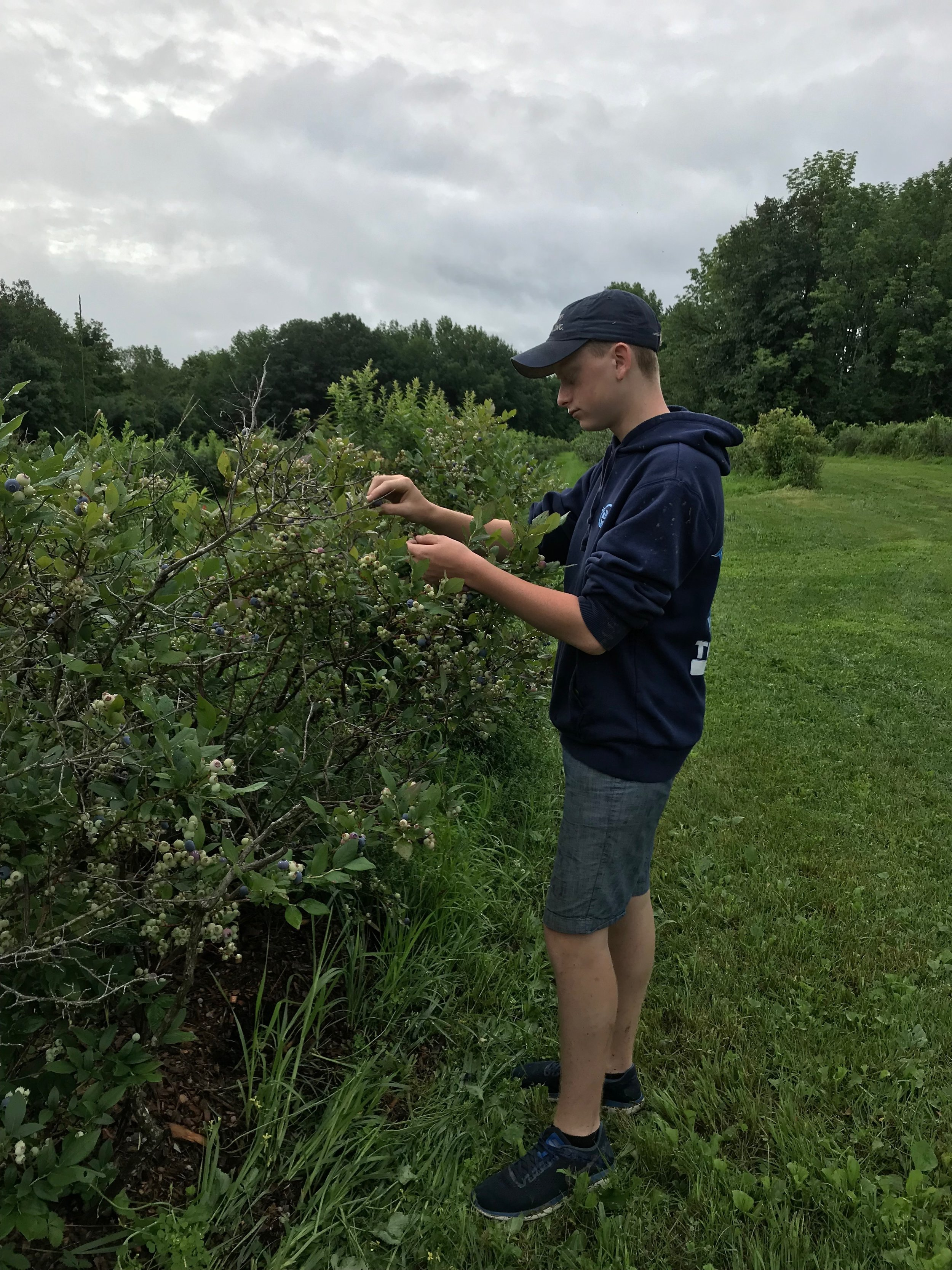 Tommy Engwer in the blueberry fields at Kelso Homestead Farm