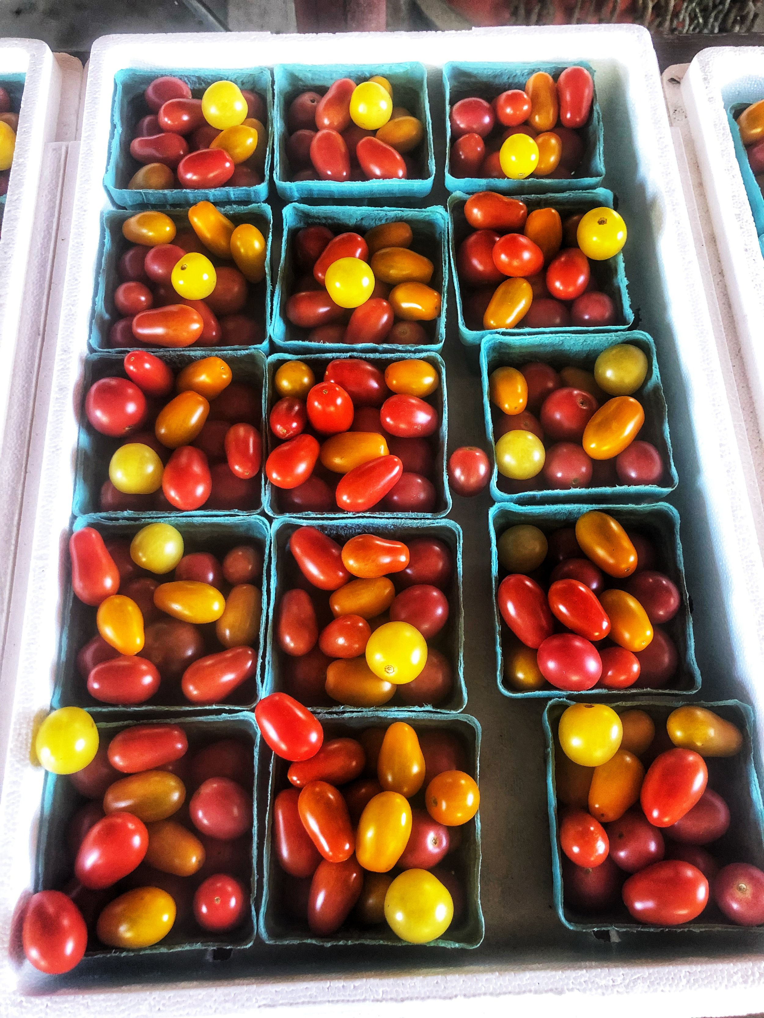 Macone Farm tomatoes for Russo's