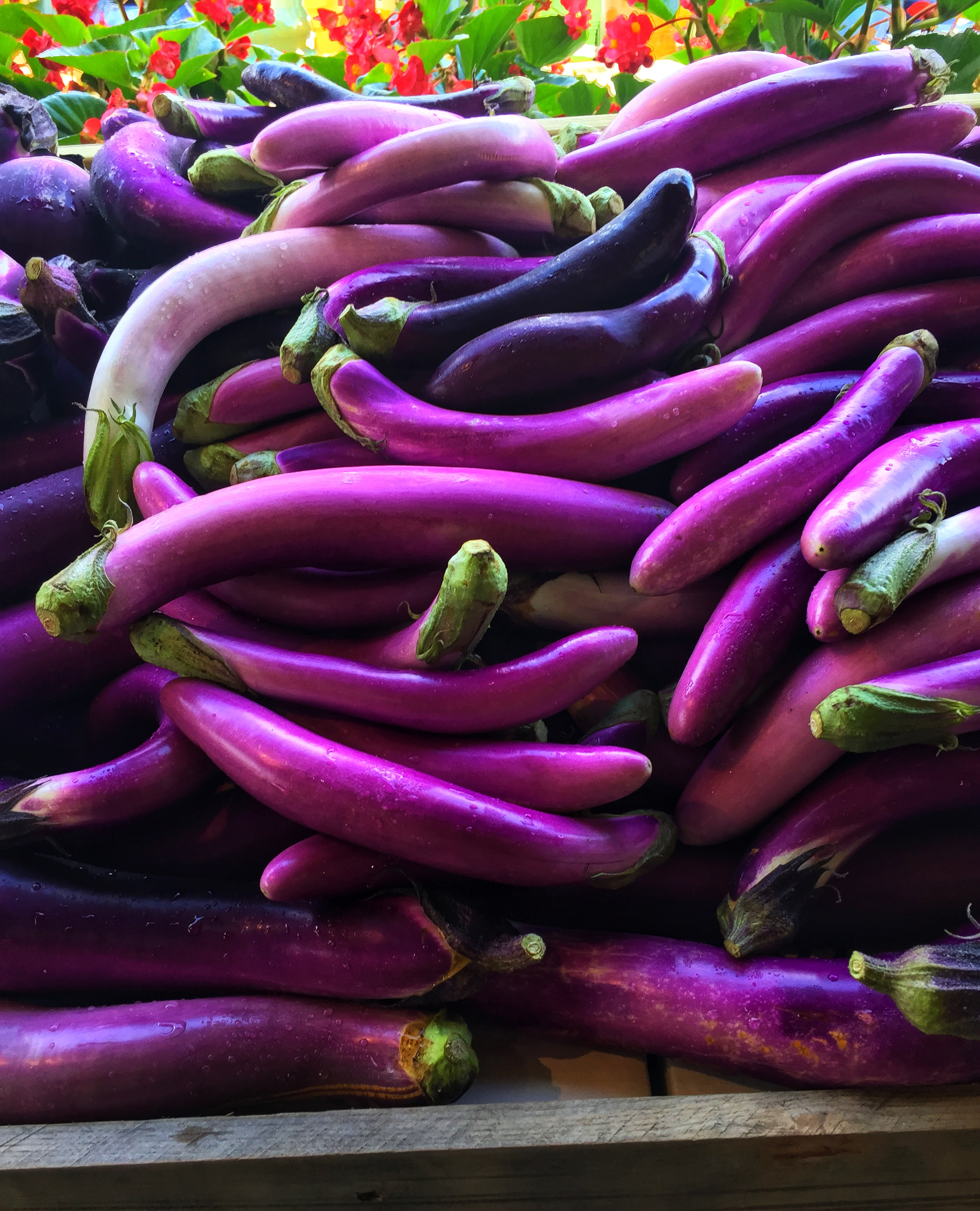 Locally grown eggplants at Russo's