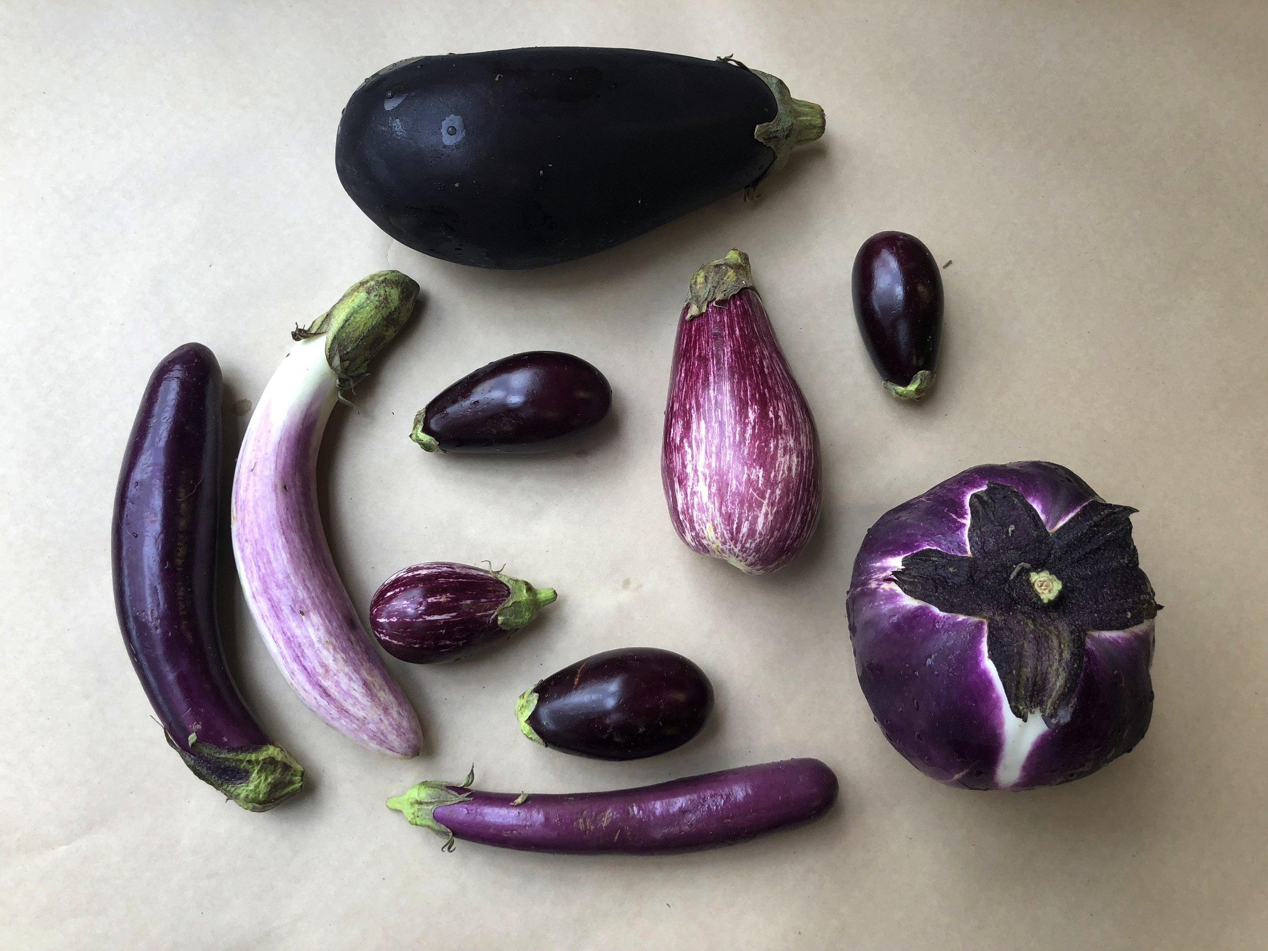Fresh picked local eggplants including Italian, Bride, Calliope, Purple, Sicilian, Finger and Neon varieties