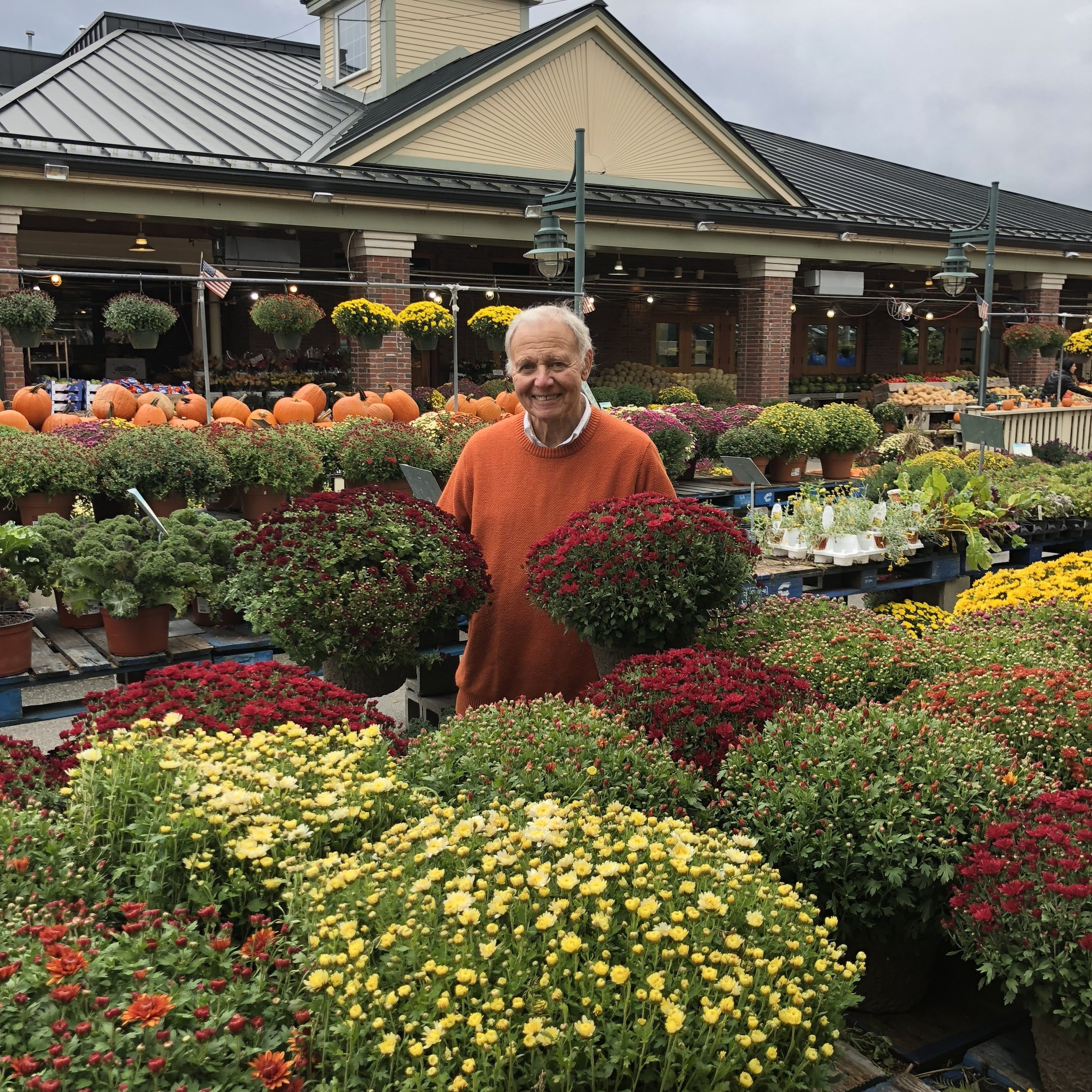 Tony Russo with one of his favorites: mums! It is not too late to buy these gorgeous plants!