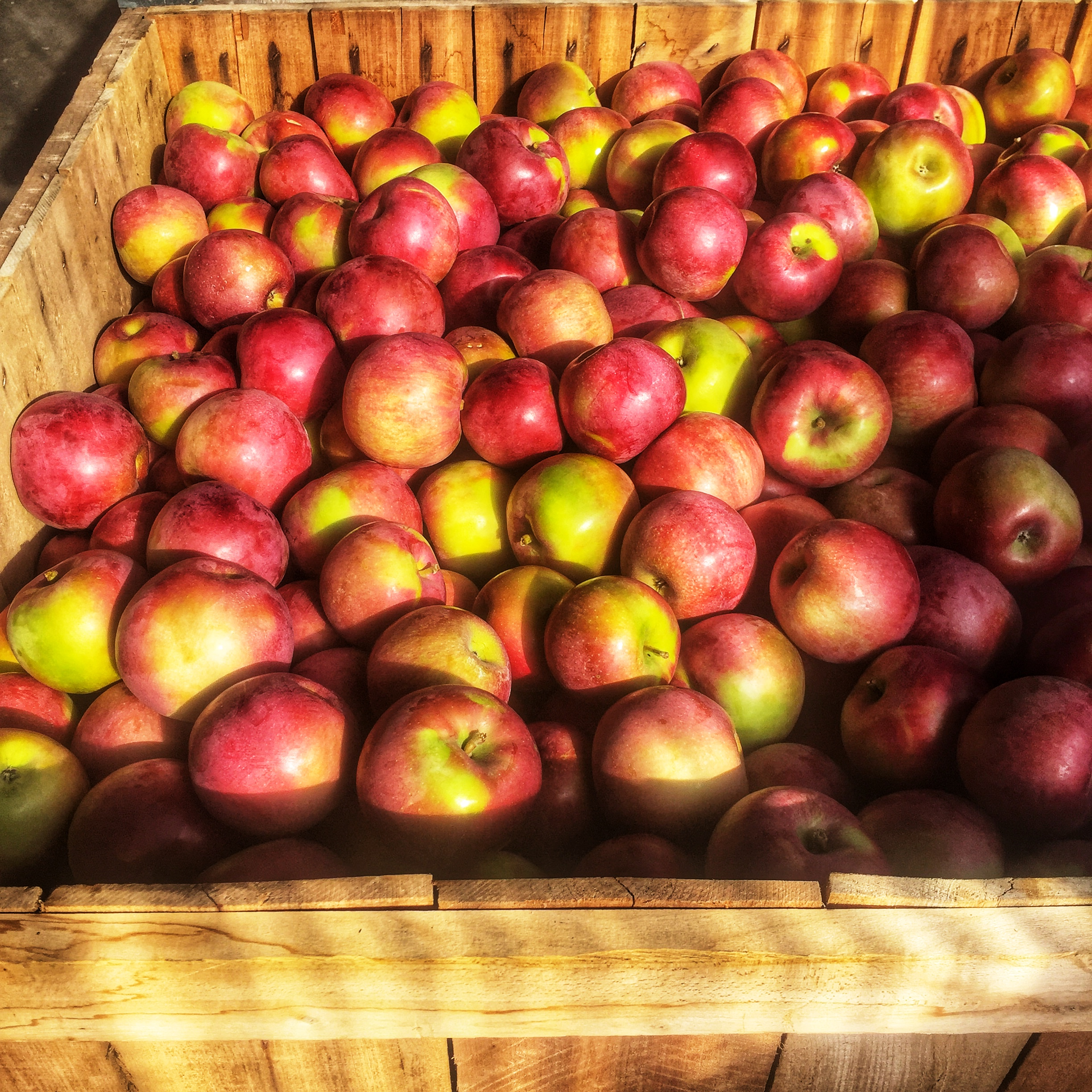 Locally grown apples at Russo's