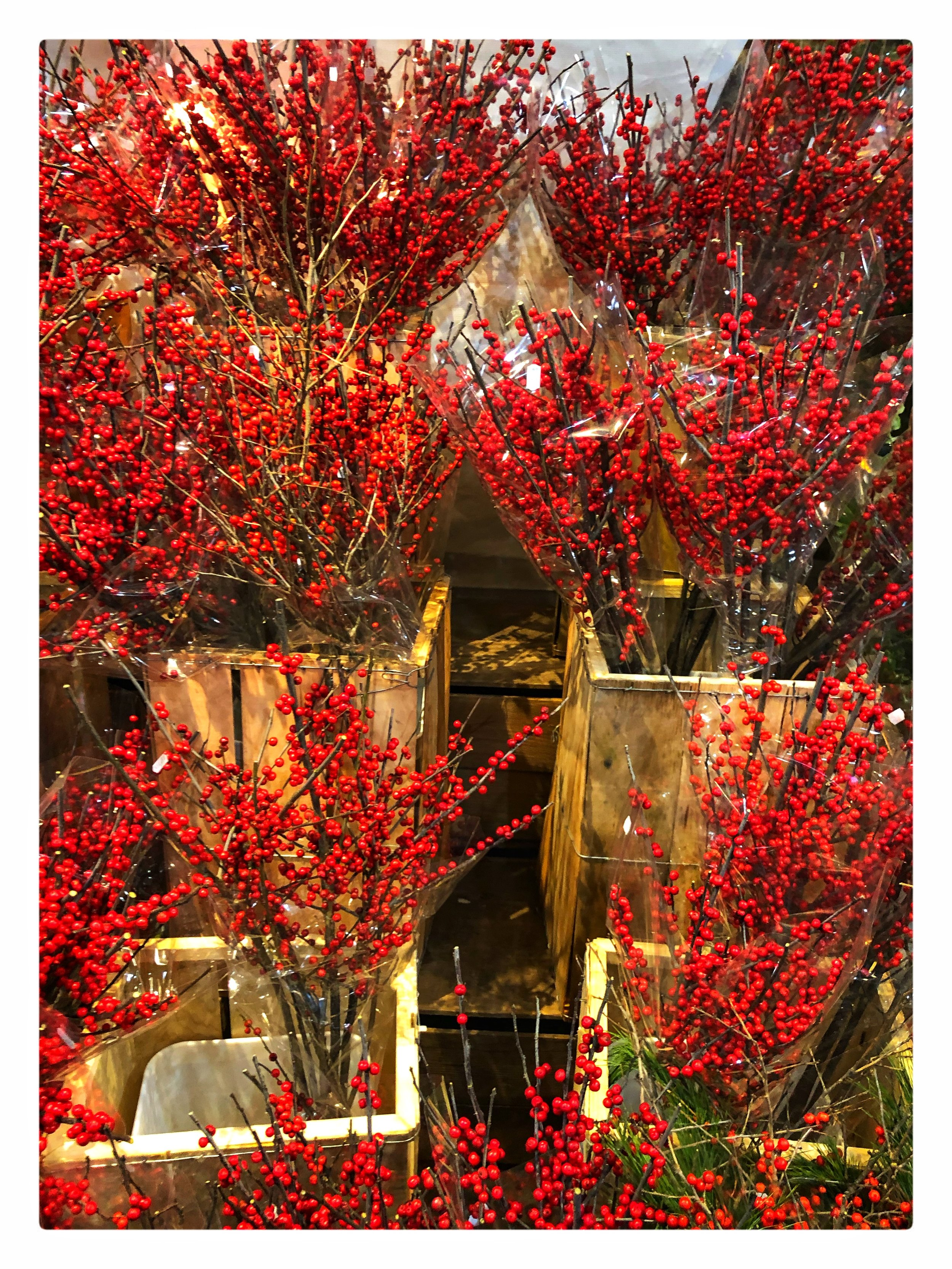 These locally-grown bright Winterberries with stems are beautiful and festive in your home!