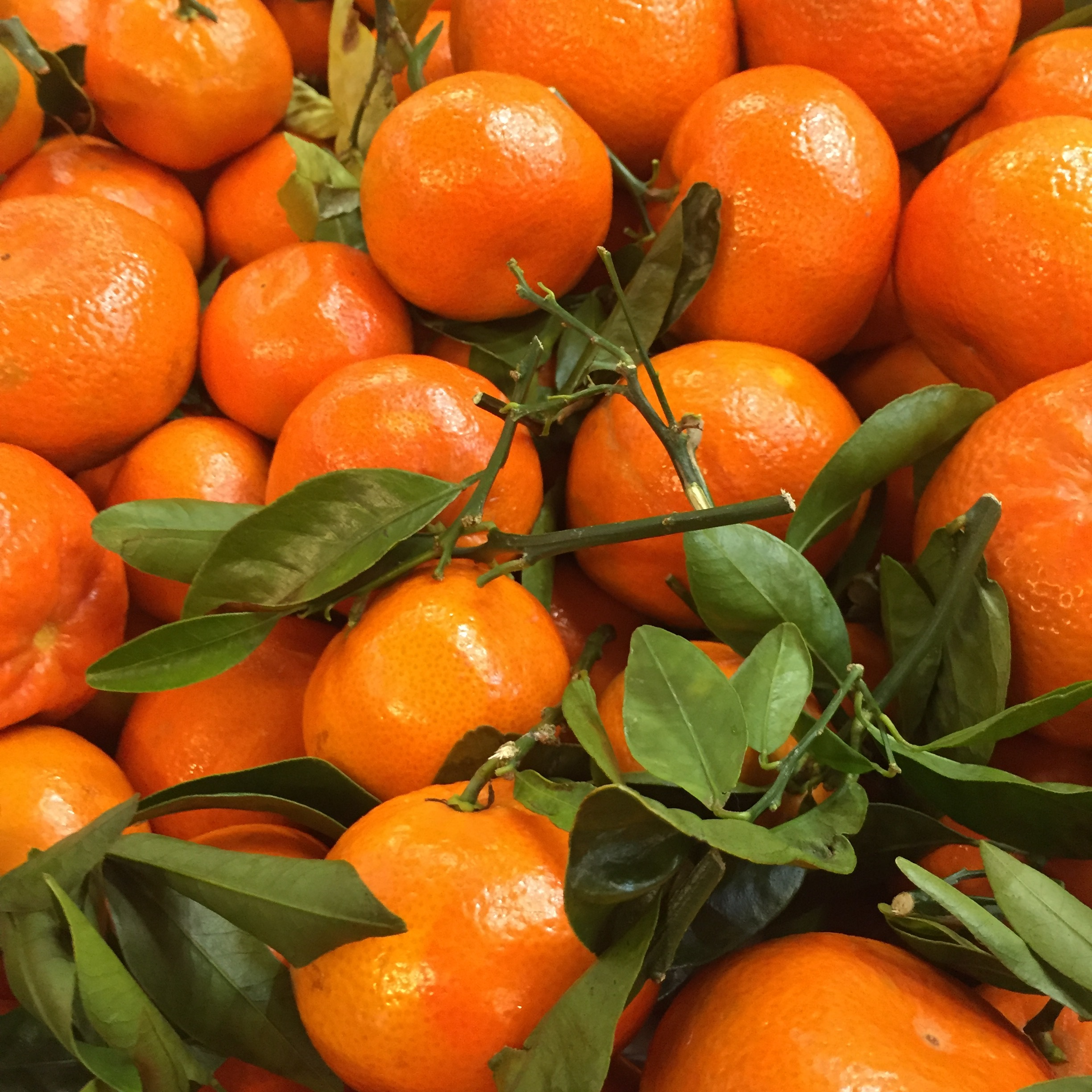 Now is the time to buy citrus! Check out our selection at Russo's this week.