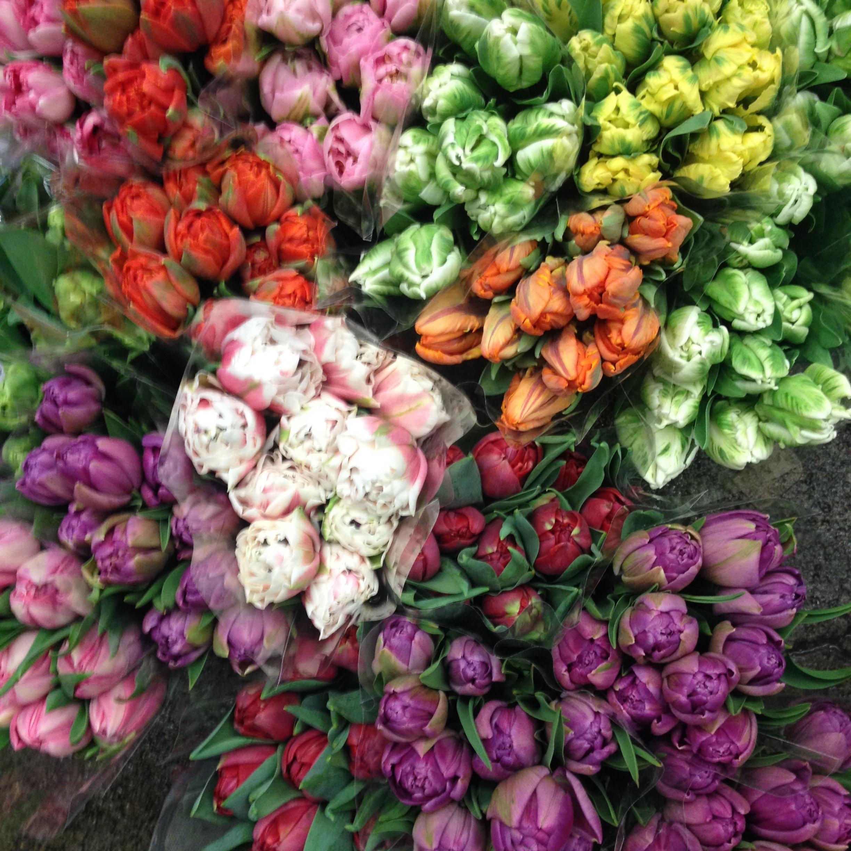 Tulips on sale this week!