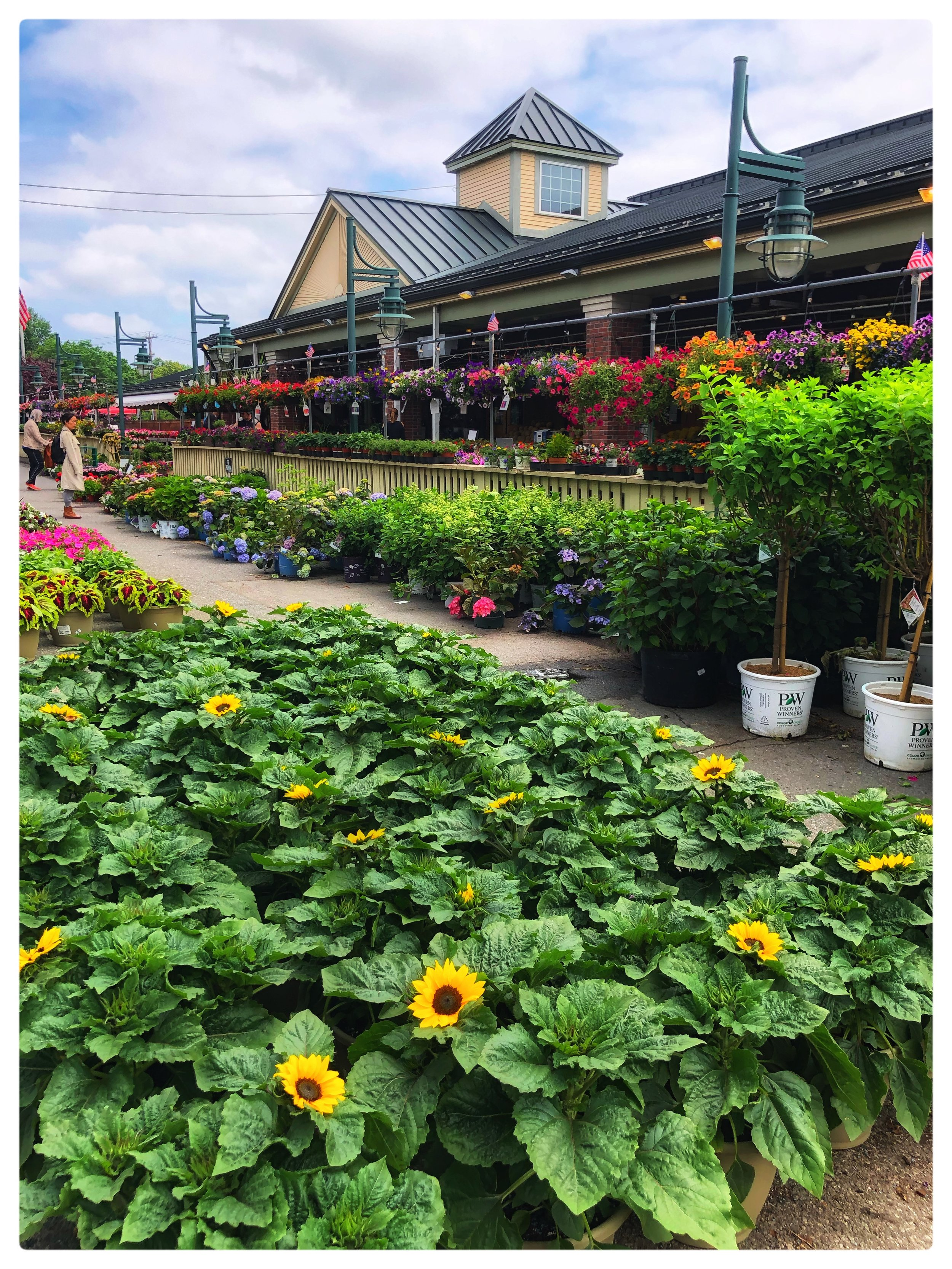 Our Plant Sale begins this week at Russo's